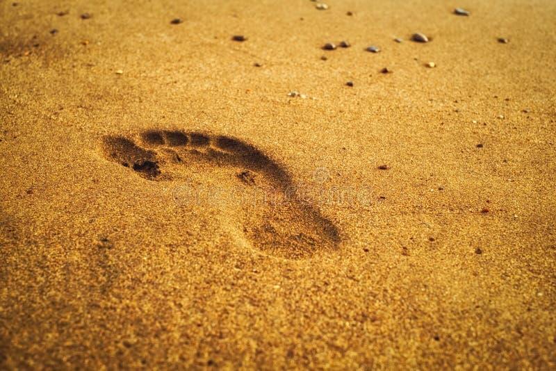 Abdrücke auf einem sandigen Strand stockbild
