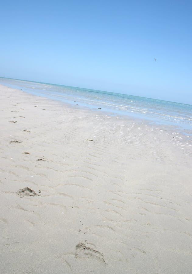 Abdrücke auf einem Strand stockfotografie