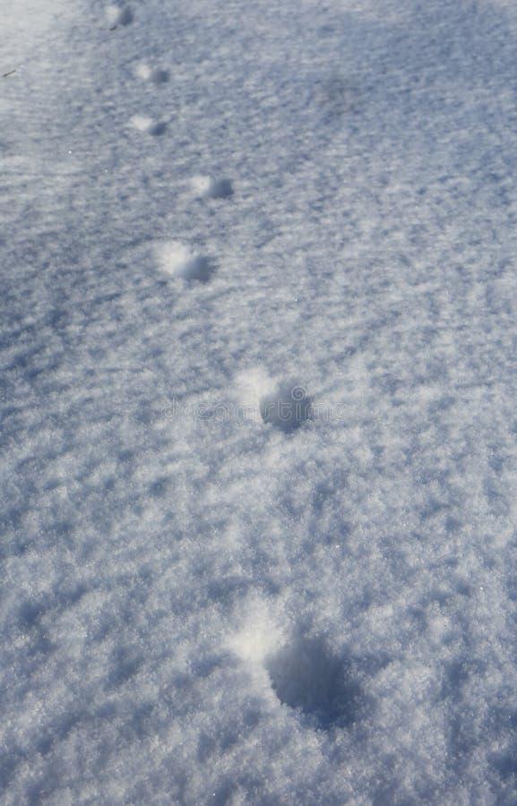 Abdrücke auf Schneeoberfläche stockfotos