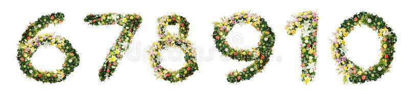 Abecadło list 6 7 8 9 10 zrobił od kolorowi kwiaty odizolowywającego o zdjęcia stock