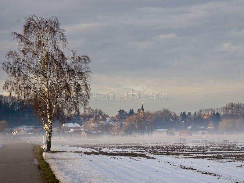 Abedul en invierno imágenes de archivo libres de regalías