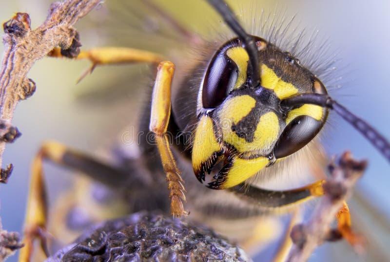 Abeille, échange, miel, guêpe d'insectes de fleur de fond images libres de droits