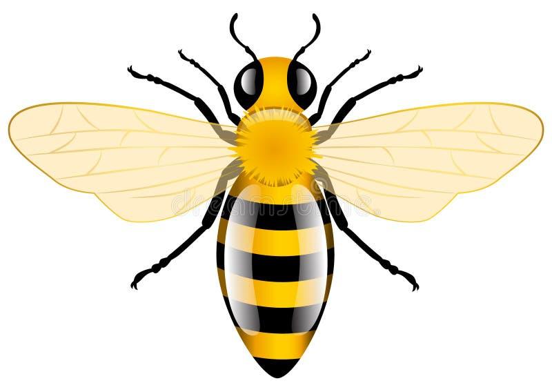 Abeille de miel illustration stock