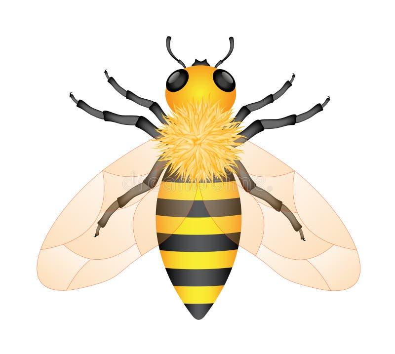 Abeille de miel illustration de vecteur