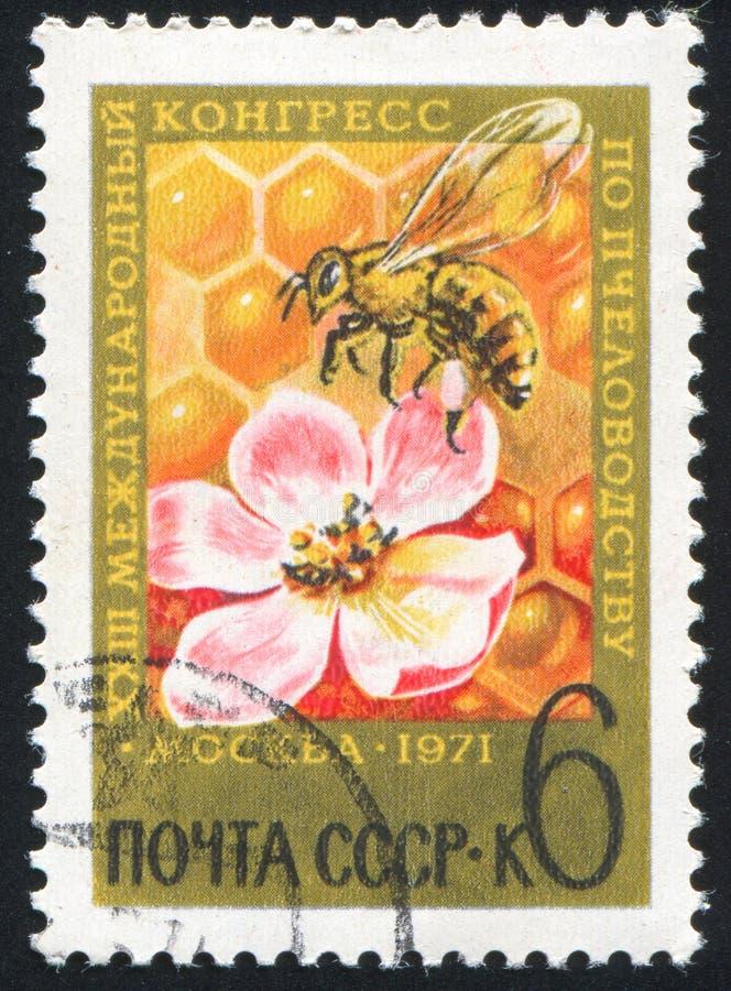 Abeille et fleur images stock