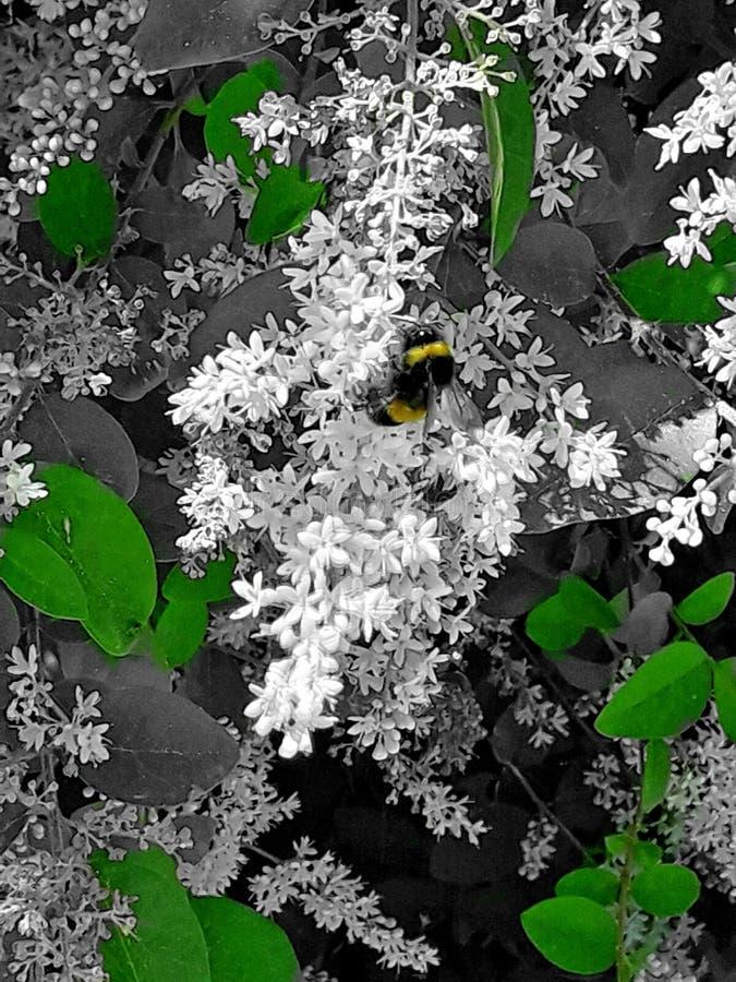 Abeille, fleurs et nature photo stock