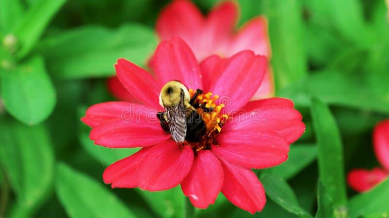 Abeille sur la fleur - fleur photo stock