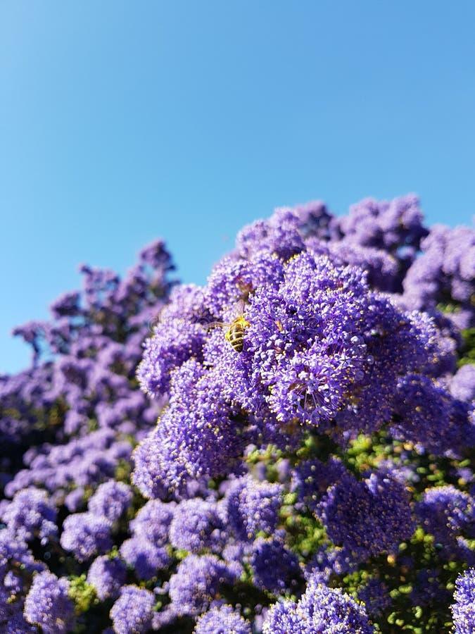 Abeille sur une fleur images stock