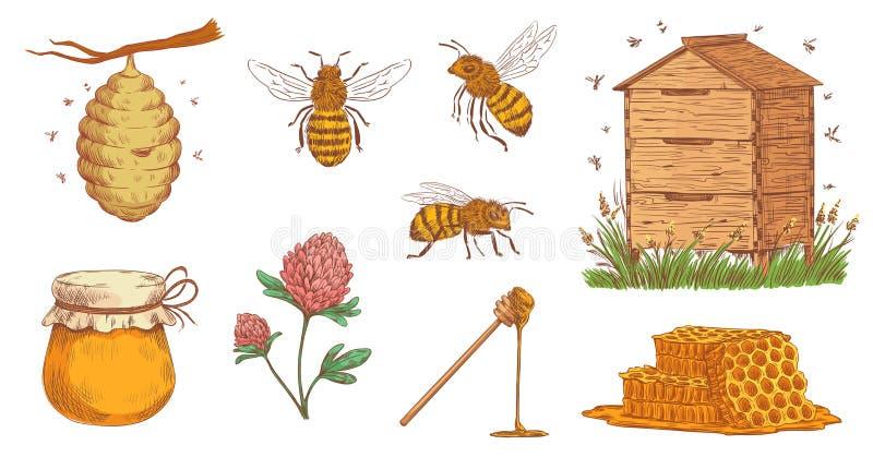 Abeille tir?e par la main de miel Gravure d'apiculteur, nid d'abeilles d'abeilles et ensemble d'illustration de vecteur de ferme  illustration stock