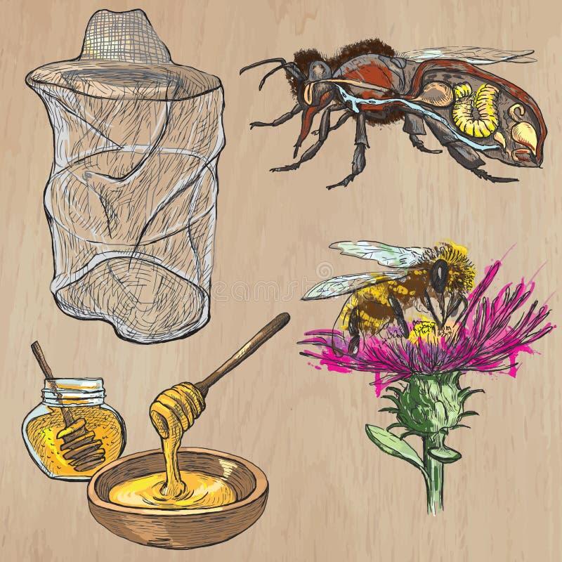 Abeilles, apiculture et miel - paquet tiré par la main 1 de vecteur illustration de vecteur