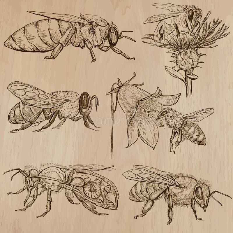 Abeilles, apiculture et miel - paquet tiré par la main 3 de vecteur illustration stock