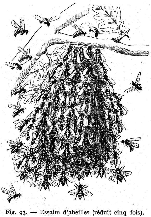 Abeilles-essaim Free Public Domain Cc0 Image