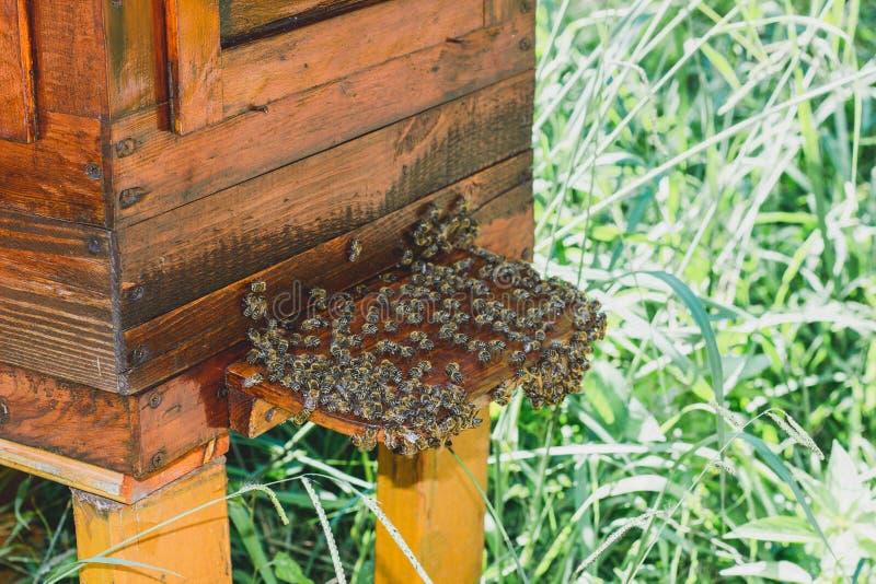 Abeilles et ruche image stock