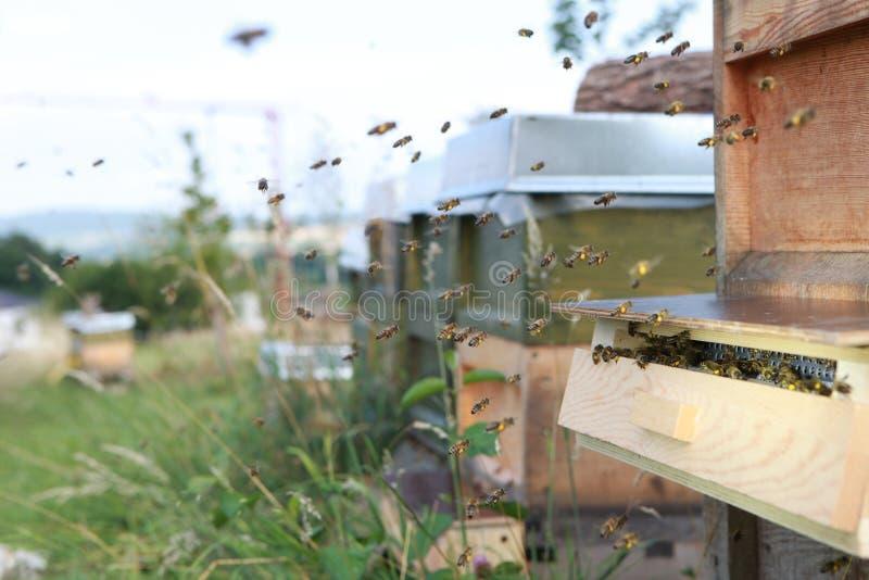 Abeilles et un piège de pollen photographie stock