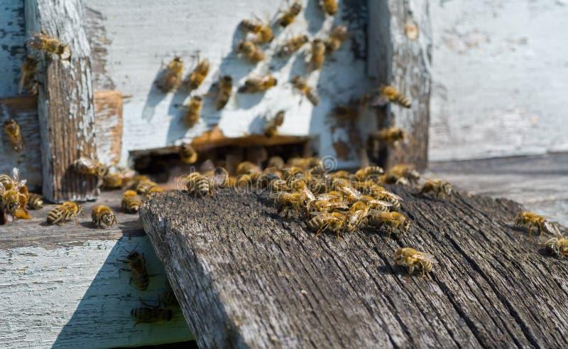 Abeilles sur la ruche 19 images libres de droits