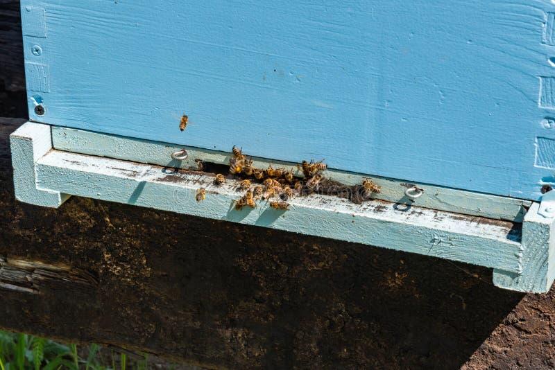 Abeilles volant ? la ruche Abeilles volant autour de la ruche Concept de l'apiculture photo stock