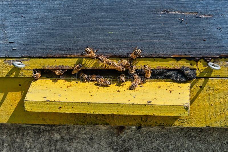 Abeilles volant ? la ruche Abeilles volant autour de la ruche Concept de l'apiculture photographie stock libre de droits