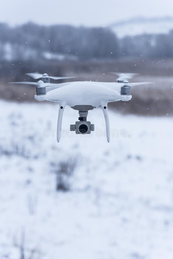 Abejón de cernido que toma imágenes de la naturaleza salvaje Tiempo fr?o del invierno Día nublado con nieve que cae foto de archivo libre de regalías