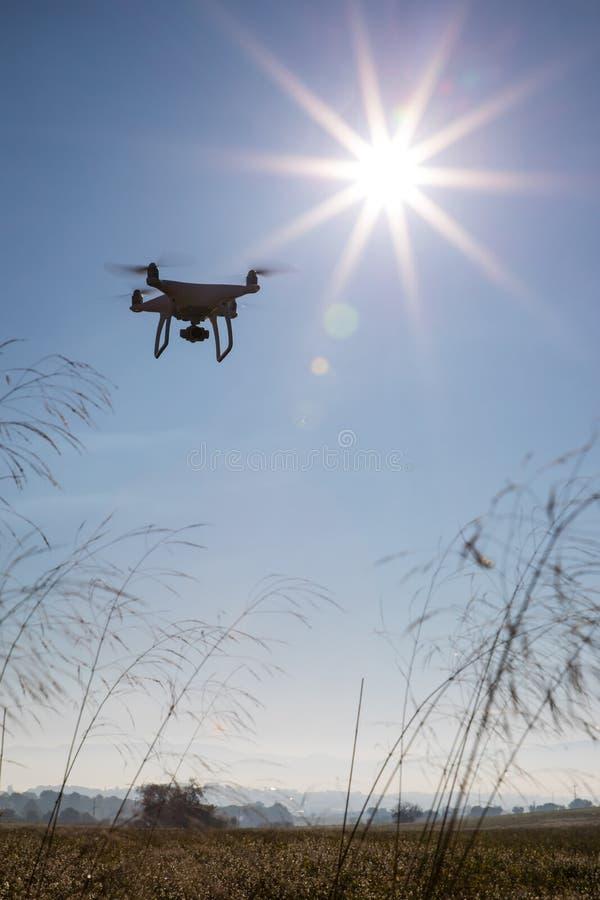 Abejón de registración en el cielo sobre campo de flores blancas fotos de archivo