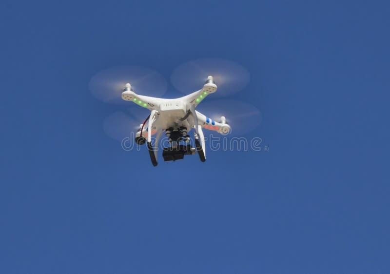 Abejón en el cielo foto de archivo
