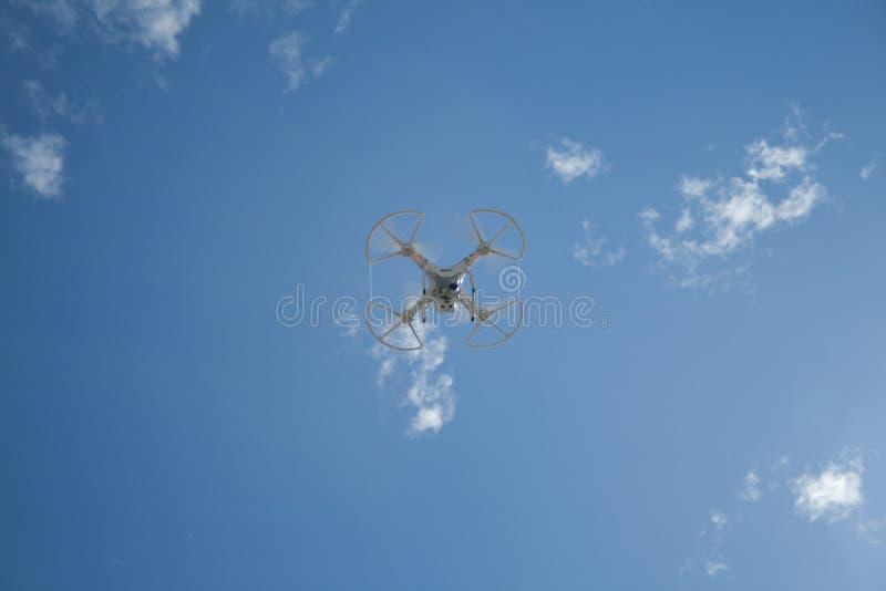 Abejón en vuelo sobre el cielo azul foto de archivo