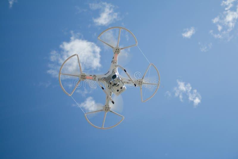Abejón en vuelo sobre el cielo azul fotografía de archivo