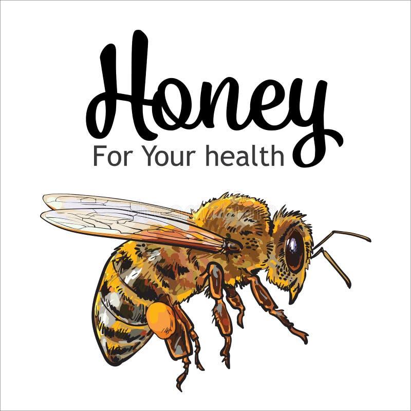 Abeja de la miel del vuelo en el fondo blanco libre illustration