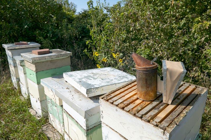 Abeja De La Miel Que Cultiva Las Cajas Y El Equipo De La Apicultura