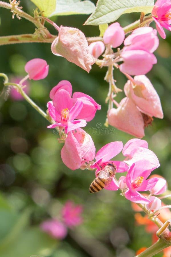 Abeja y flores foto de archivo