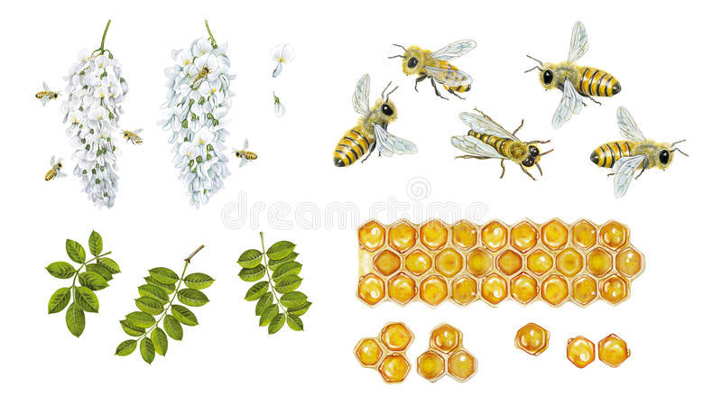 abejas libre illustration