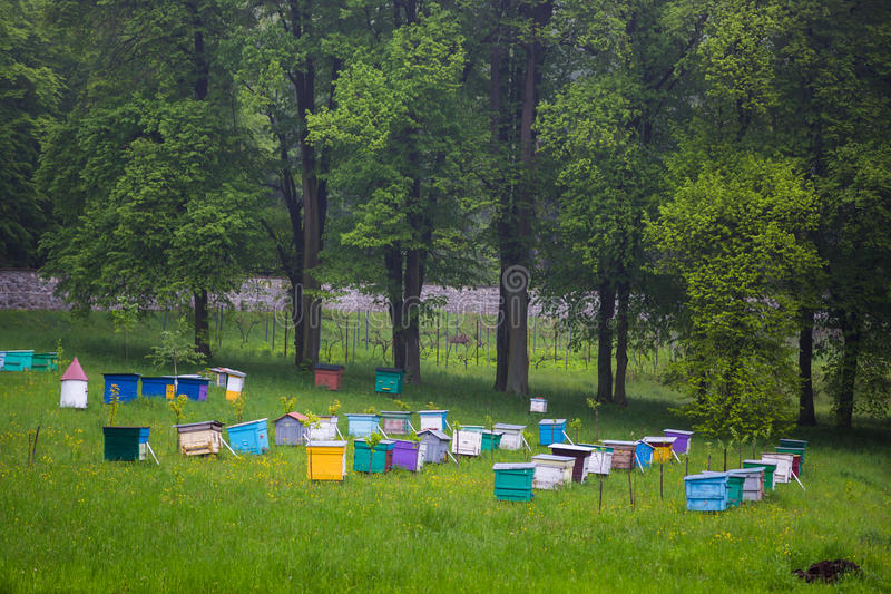 abejas Apicultores que trabajan en colmenar foto de archivo