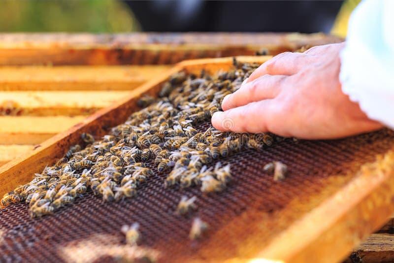 Abejas, colmenas y máquinas segadores de la miel en un colmenar natural del campo imagen de archivo