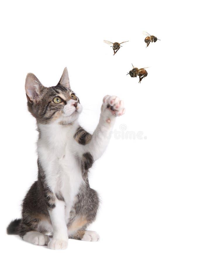 Abejas de cogida del gato divertido foto de archivo libre de regalías
