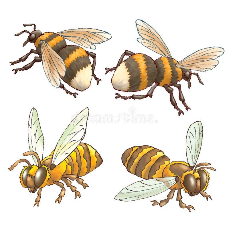 Abejas y abejorros stock de ilustración