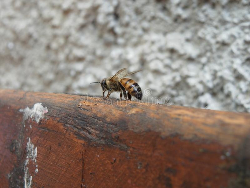 abelha afastada em casa imagens de stock