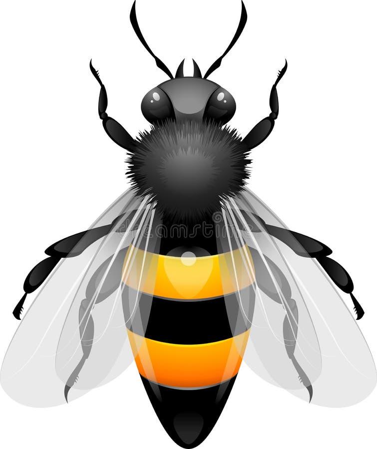 Abelha do mel ilustração do vetor
