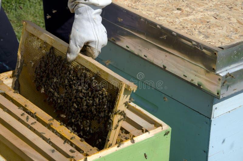 Abelha do mel no favo de mel imagem de stock royalty free