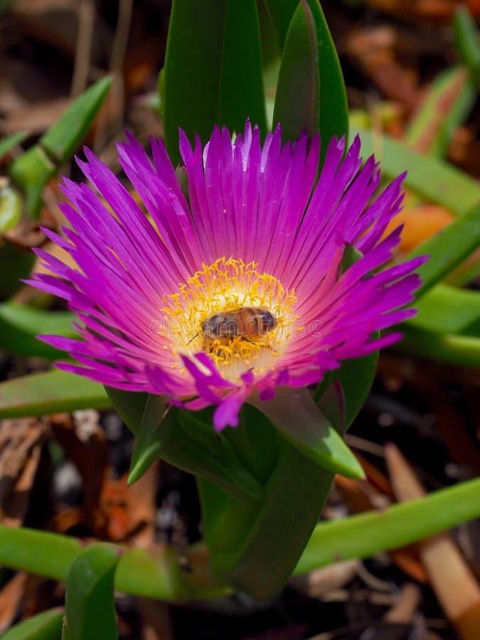 Abelha e flores selvagens fotos de stock