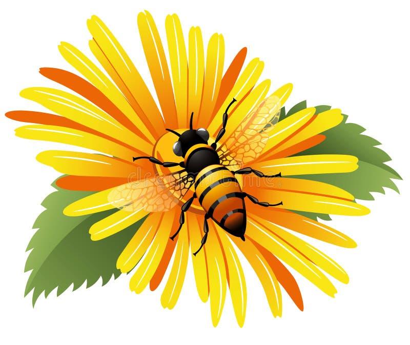 Abelha em uma margarida amarela ilustração royalty free
