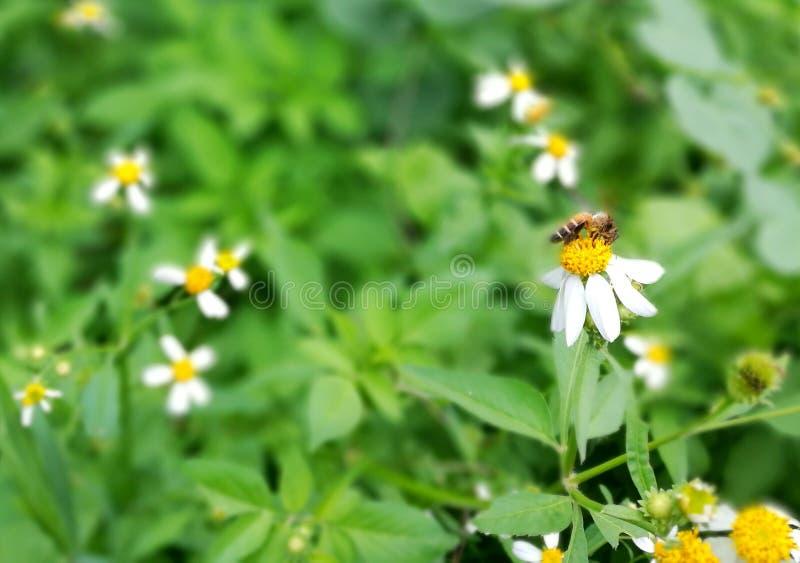 Abelha & flor fotos de stock royalty free