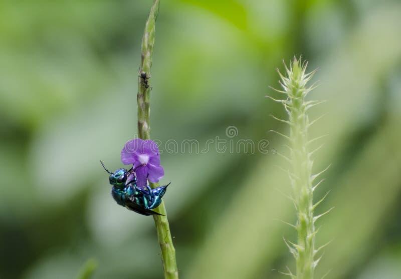 Abelha & formiga da orquídea foto de stock