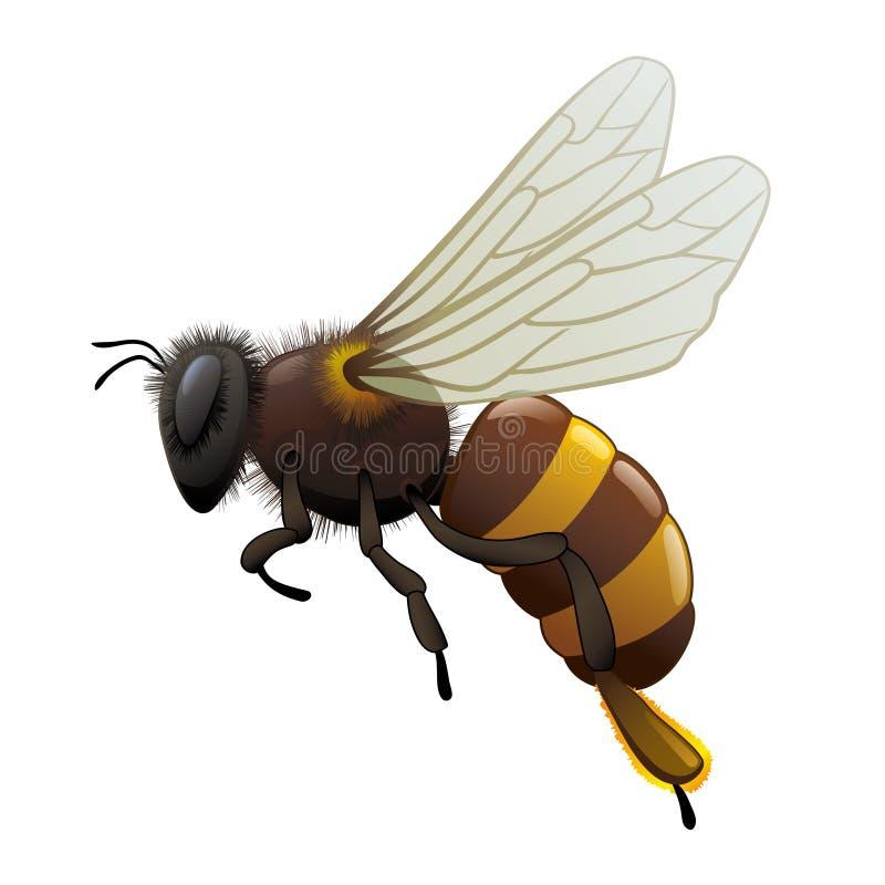 Abelha - inseto ilustração do vetor