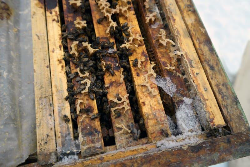 Abelhas congeladas à morte imagem de stock