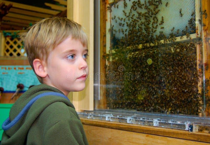 Abelhas de observação do menino novo em uma colmeia no favo de mel imagens de stock royalty free