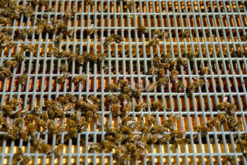 Abelhas de trabalho em pilhas do mel imagem de stock royalty free