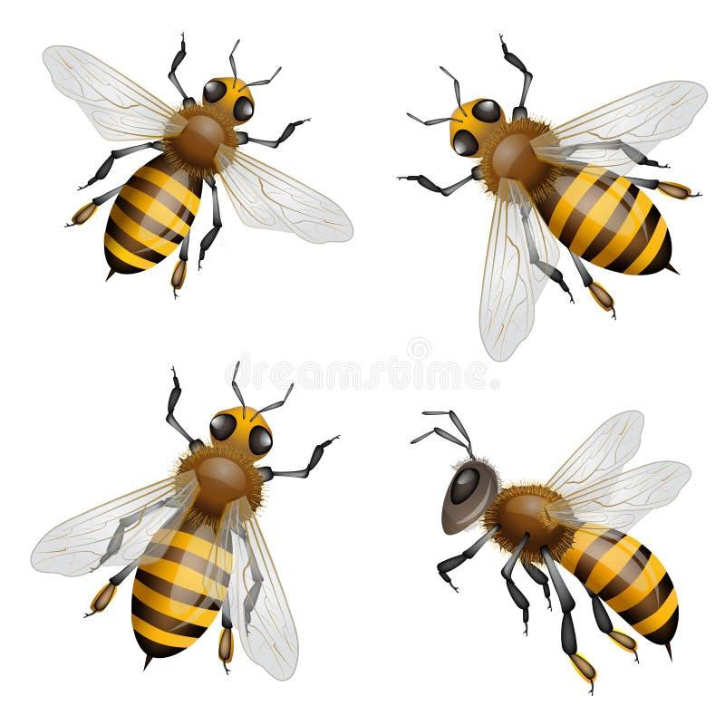 Abelhas do mel ilustração stock