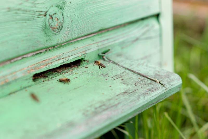 Abelhas que vêm para trás à colmeia fotos de stock