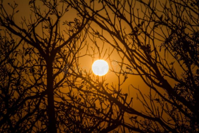 Am Abend ist die Sonne fallende Bäume, die als der Hintergrund stockbild