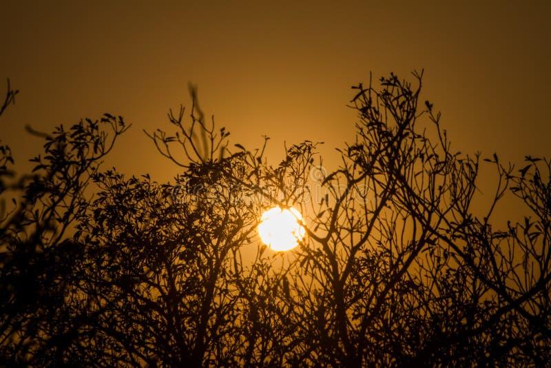 Am Abend stellt die Sonne hinter die Bäume ein Welches der Hintergrund ist stockfotos