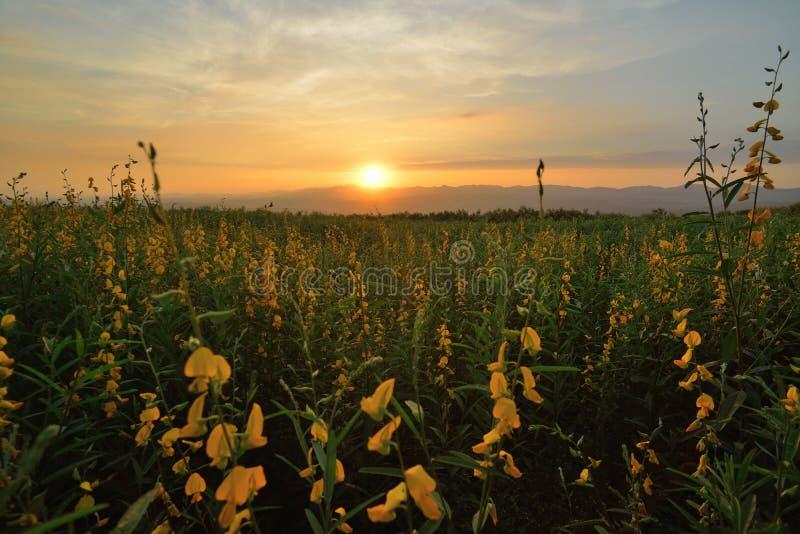 Abendblumenfeld lizenzfreie stockfotografie